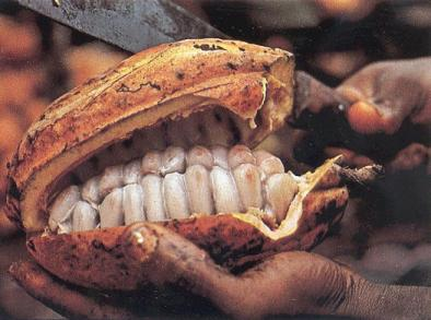 teeth cocao 001