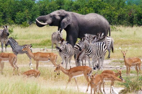 Ultimate-Luxury-Botswana-Wildlife-Safari